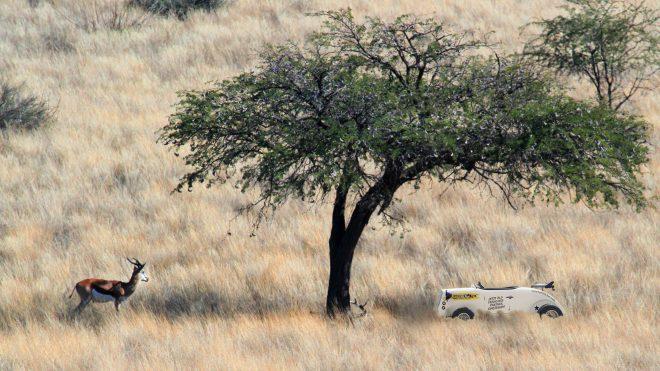 Was unsere Hot Rods und afrikanische Springböcke vereint